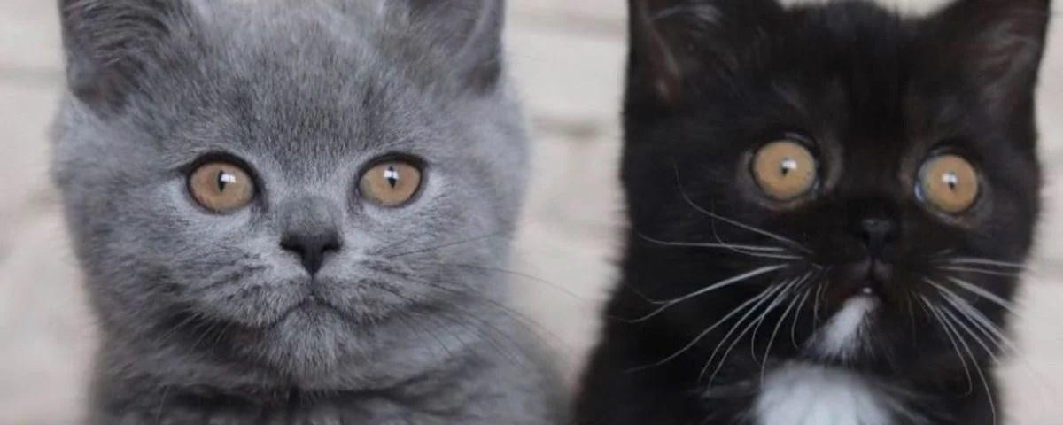 Gato de duas cores vira pai e tem um filhote de cada cor [Fotos]