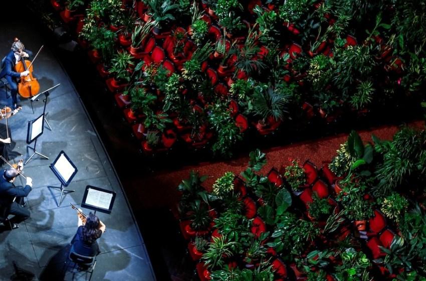 Efecto cuarentena: En Barcelona sientan plantas en las butacas de un gran teatro y les tocan música de Puccini