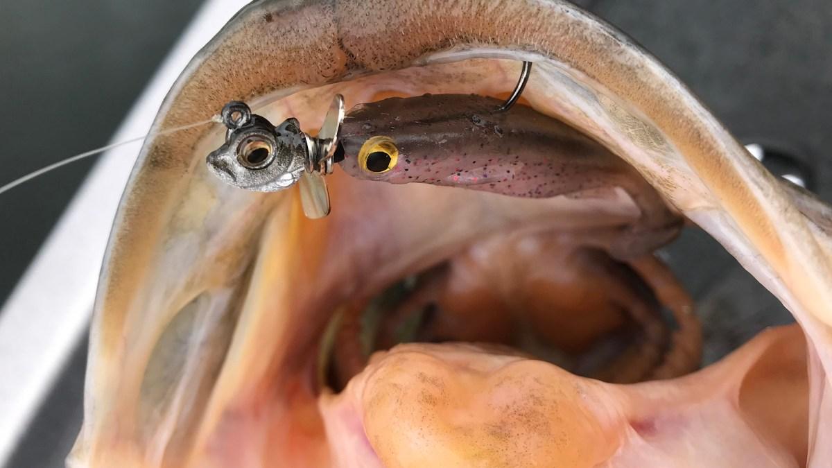 okishira screw head - spark shad - close up