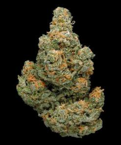 Buy OG Kush and Feminized seed