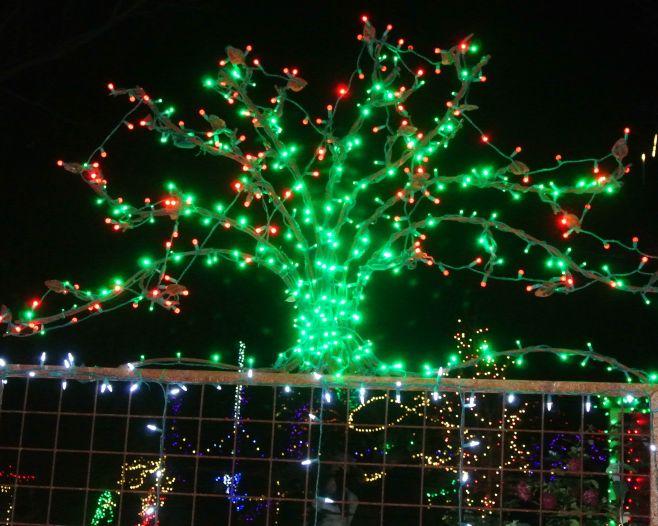 Botanical Gardens 027
