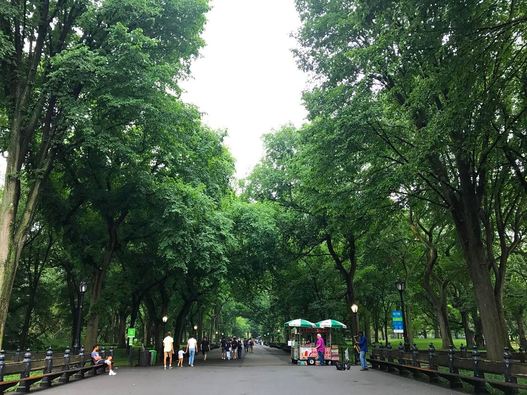 "Central Park Promenade 🍃 I fell in love with you watching Kramer vs. Kramer and Woody Allen movies and I escaped inside your grandiose beauty on my long walks home from one of my first official NYC jobs usually with a disc man in my pocket listening to ""mix cds"" @williedictionary made and sent to me from Virginia. Your magic never ceases to amaze me."