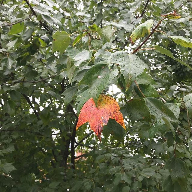 First sign of Fall. 🍁
