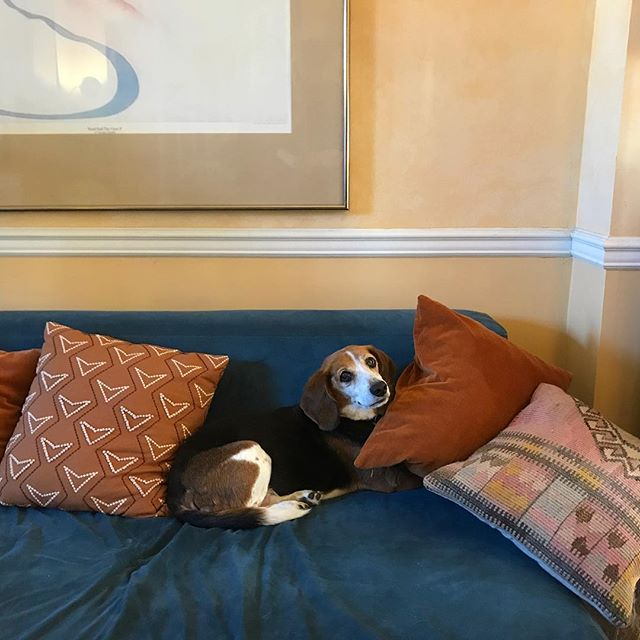 Lower left of Georgia O'Keefe's Road Past The View II and our little beagle with heavy eyeliner who sleeps under the cushions and growls when caught.
