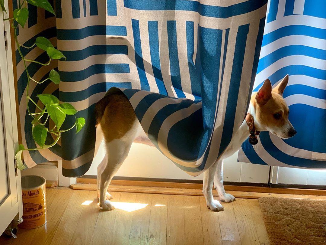 Still Life With Dog