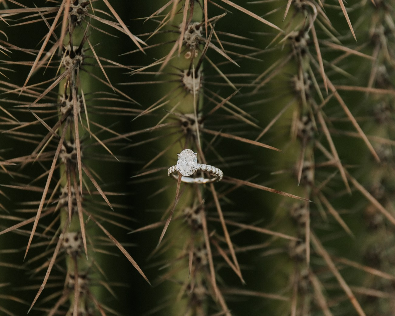 Megan Claire Photography | Arizona Wedding Photographer. Desert engagement portrait photoshoot. Cactus oval diamond engagement ring @meganclairephoto