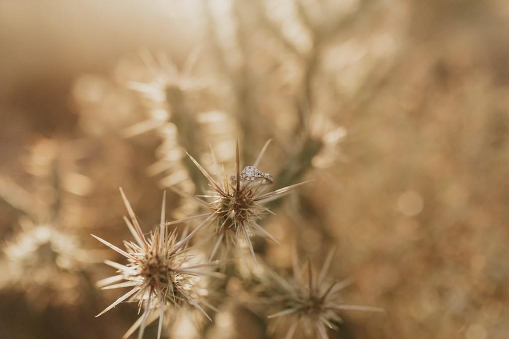 Megan Claire Photography | Phoenix Arizona Wedding and Engagement Photographer.  arizona desert engagement session at sunset @meganclairephoto