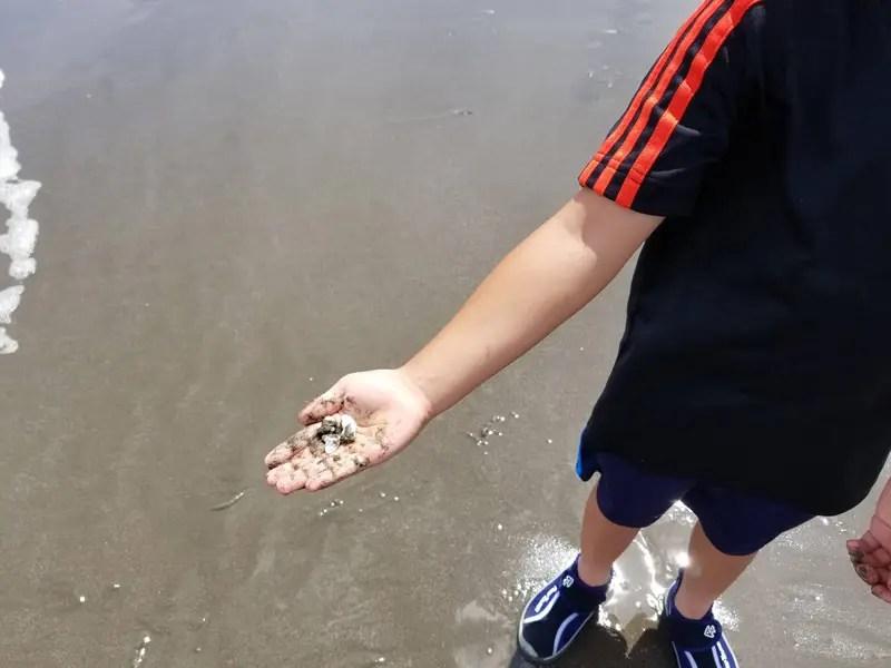 貝を取ったむすこ