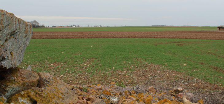 Visite commentée de la nécropole de Monpalais à Taizé (Deux-Sèvres)