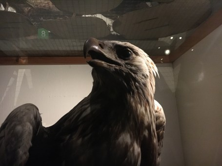 Whitaker Park's taxidermy exhibition