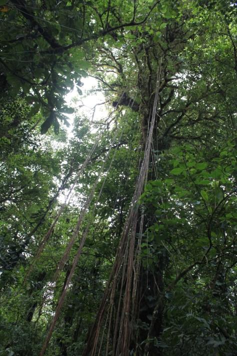 Reserva Santa Elena, Costa Rica 2014