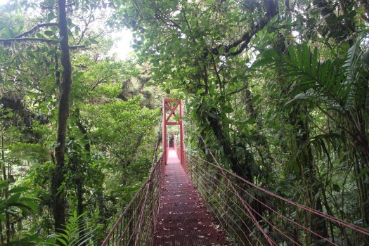 Bridge Through Cloud Forest Canopy in Monteverde, Costa Rica 2014
