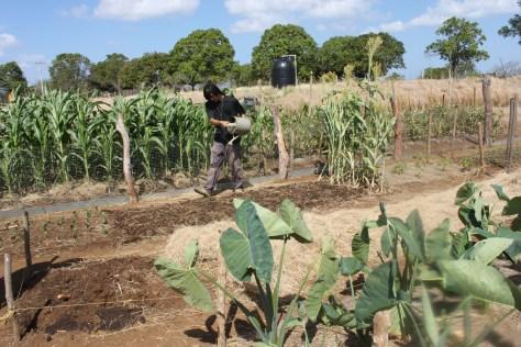 Bio-Nica Bio Intensive Farm, Nicaragua 2014