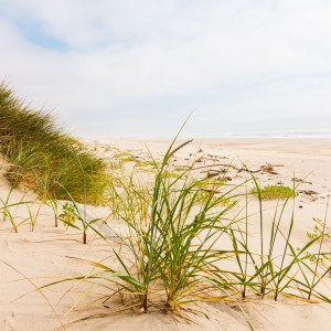 Picture of grass on a sandy beach.