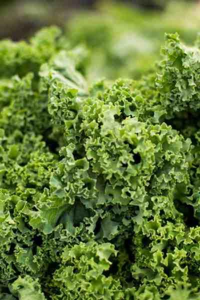 grow kale with kids