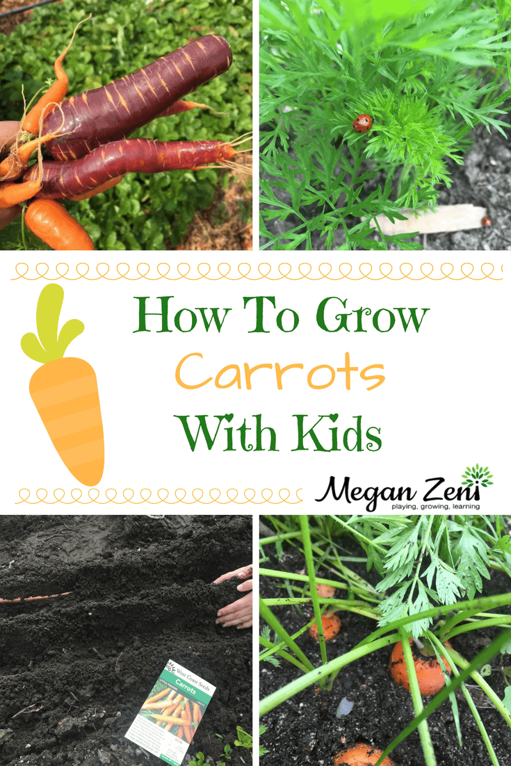 How to Grow Carrots forecast
