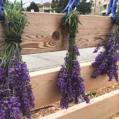 Easy Lavender Playdough