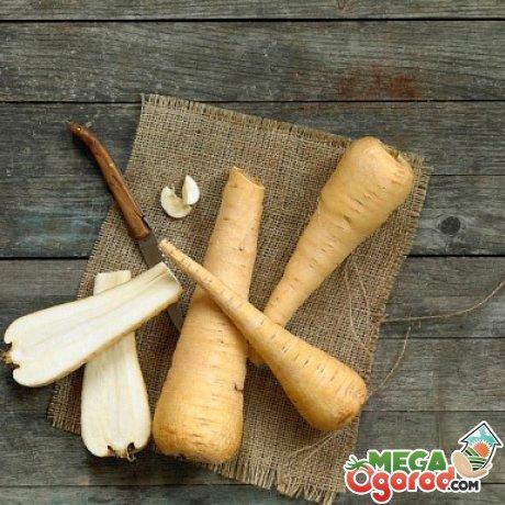 Что за овощ пастернак: фото, особенности ухода и полезные свойства. Основные полезные свойства корня пастернака
