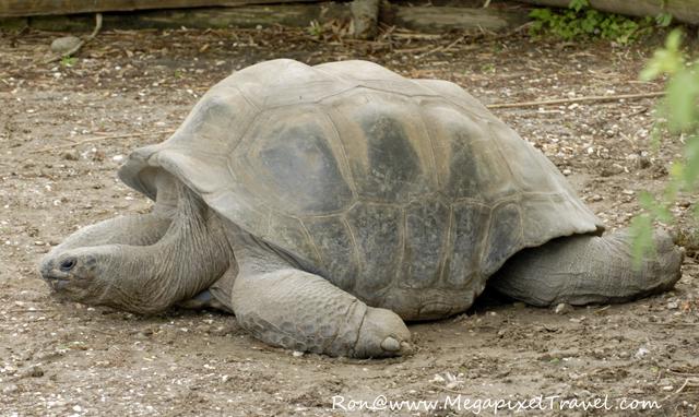 Tortoise Audubon Zoo New Orleans