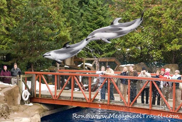 Vancouver Aquarium, Vancouver, B.C. Porpoise in air