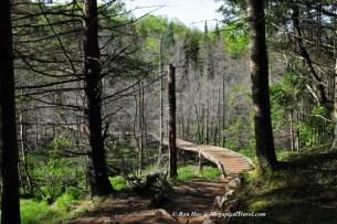 RON_3237-Marcy-Dam-Trail