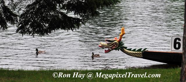 RON_3941-Fearless-ducks