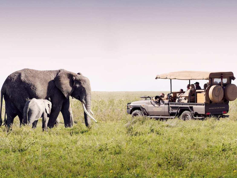 Tanzania Safari Experience 2019