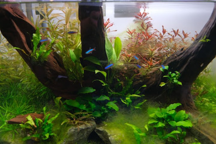 To kickstart this particularly interesting hobby, you might want to visit La Floreria (2/F), which offers aquascape materials and workshops.