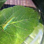 Summer science learning activities with plants are easy