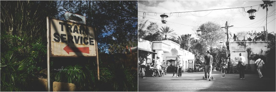 Disney's Animal Kingdom, Walt Disney World, Meghan Mace Photography