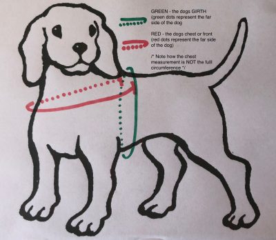 How to measure your dog for the Meg Heath martingale dog harness