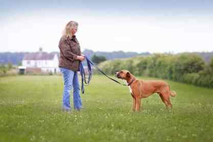 dog training lead