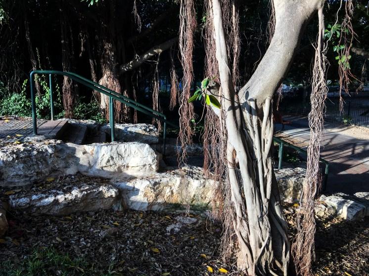 Politis Park, Ramat Aviv, Rick Meghiddo