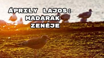 Jöjjön Áprily Lajos: Madarak zenéje verse.