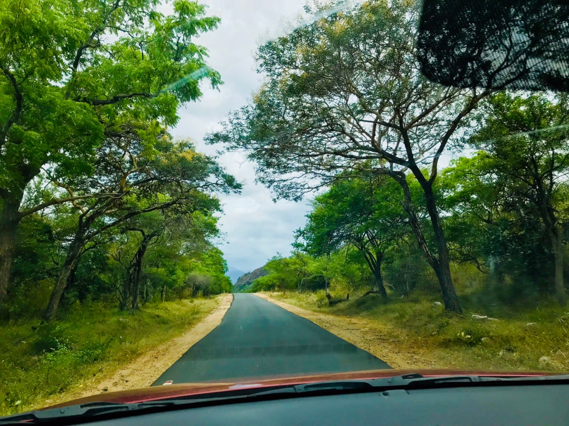 The road through the Anamalai Tiger Reserve