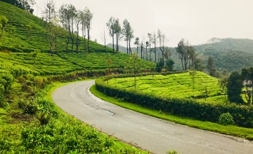 This picture says it all that why monsoon is the best time to visit Munnar hill Sattaion.