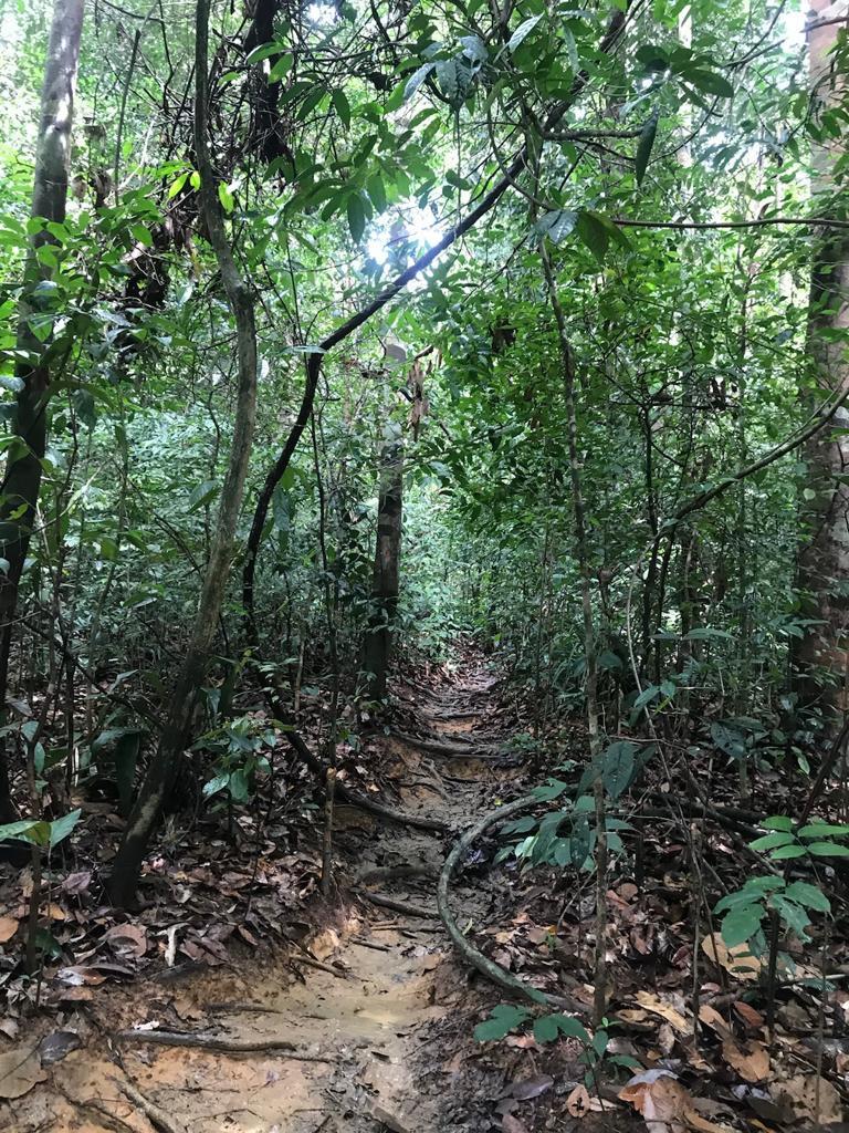 Gunung Panti hike 3