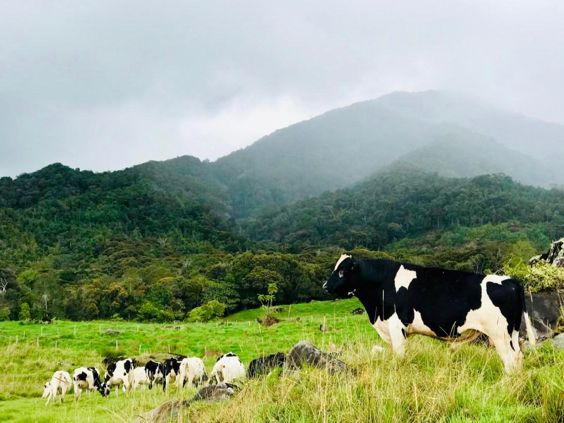 Kota Kinabalu Desa Dairy Farm 9