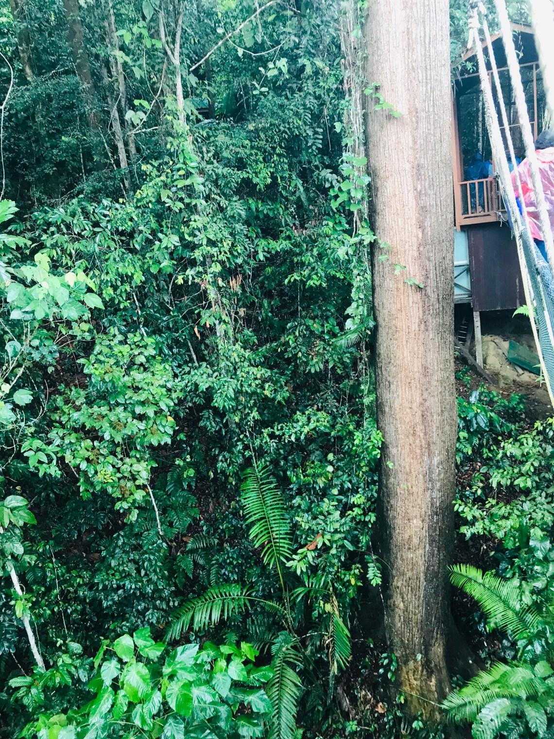 Kinabalu National park 1