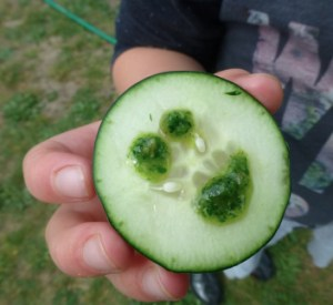 earth day cucumber pesto nibble P1100010
