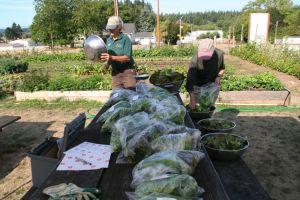 Bagging fresh produce