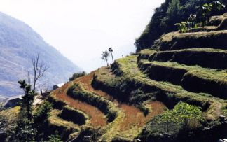 Terraces everywhere at lower altitudes