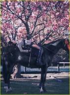 lana-del-rey-v-magazine-02