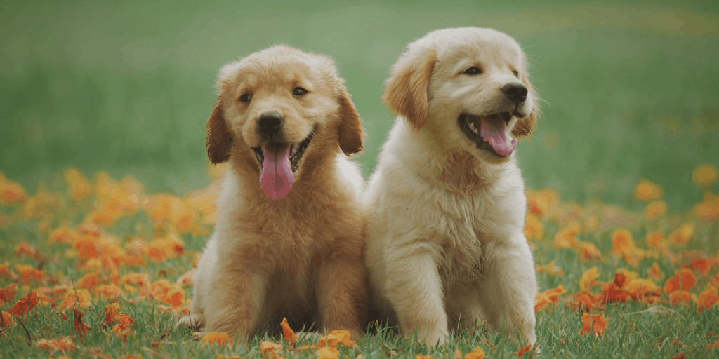 4 Signs That Show Your Dog is Infected with an Allergy