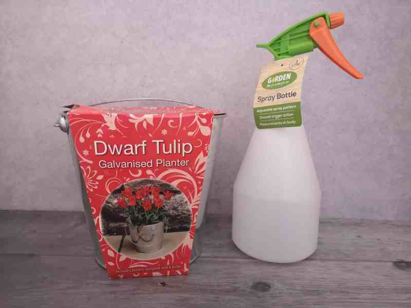Home Bargains dwarf tulip planter and spray bottle