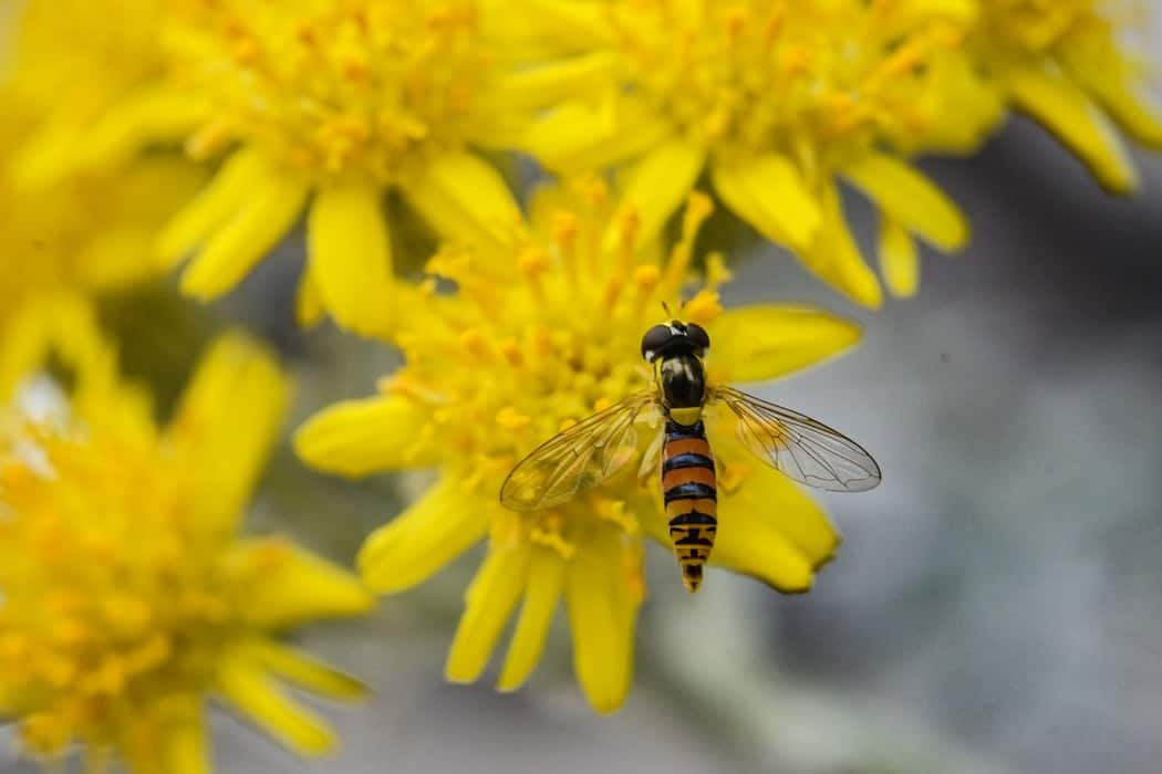 Protect Your Garden From Pests