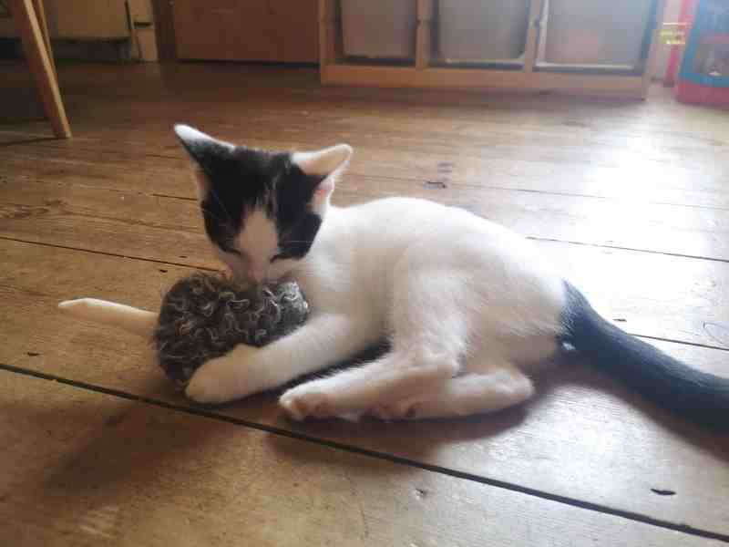 PetLove refillable mouse catnip toy
