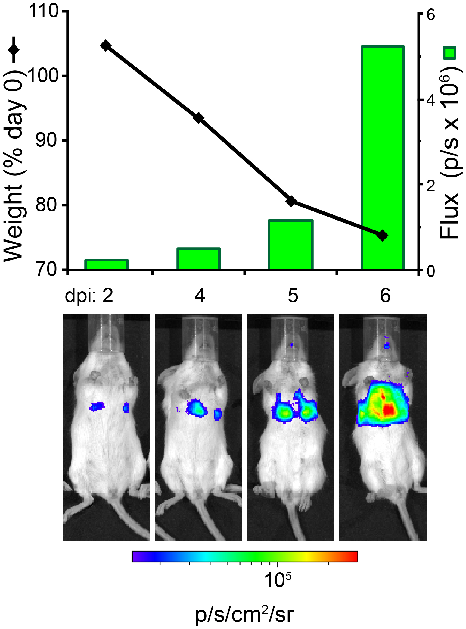 Highly Sensitive Real Time In Vivo Imaging Of An Influenza