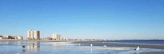 November Seabirds Taking in View