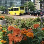 名古屋の玄関を彩る、名古屋駅前の「おもてなし花だん」で、癒しのひと時を